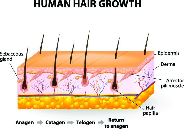 how to regrow hair naturally