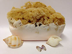 Goats' Milk and Olive Oil Soap Bar with Attached Organic Sea Sponge by Mother Ocean Naturals