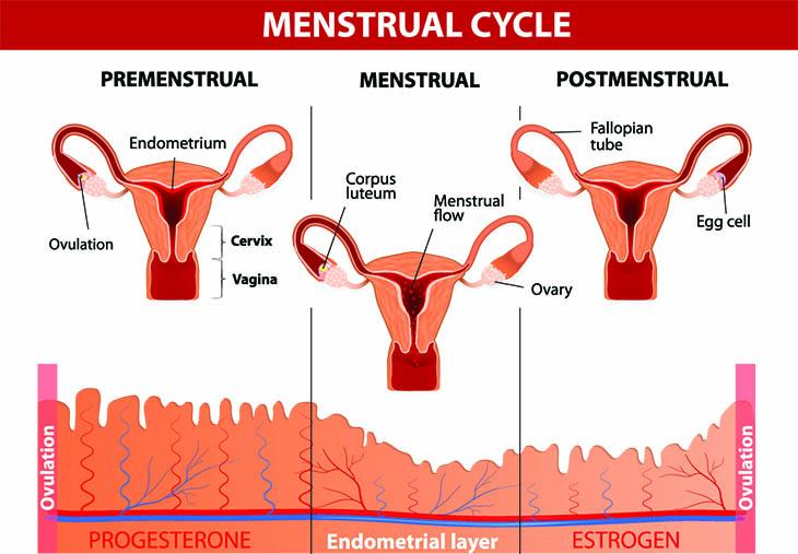 menstrual cycle vitamins