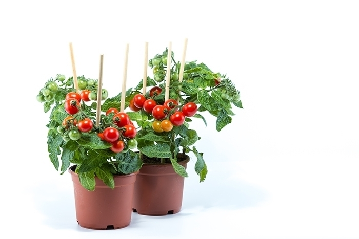 Complete Guide To The Best Plants To Grow & Eat At Home